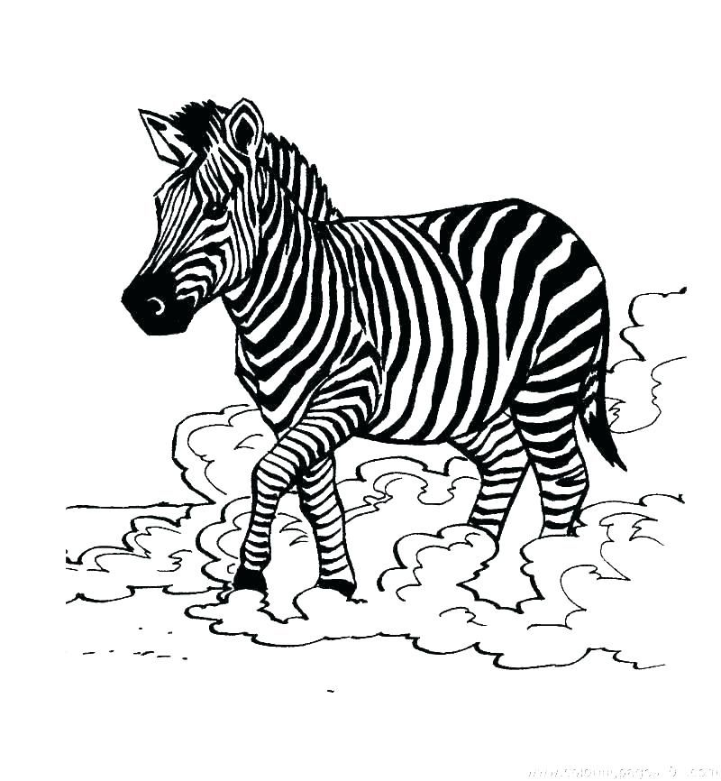 Realistic Zebra Coloring Pages