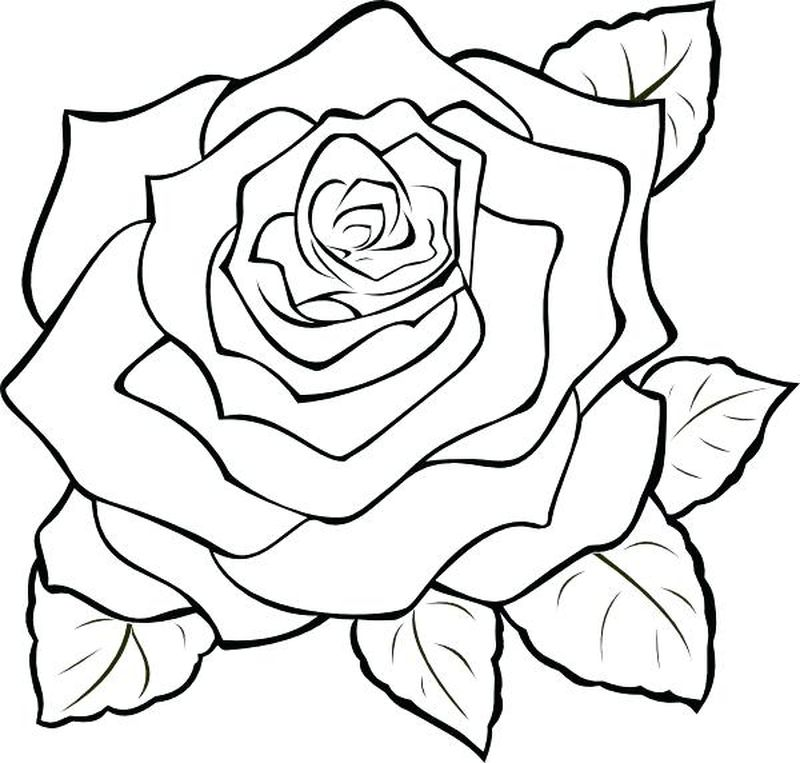 Rose Coloring Pages Pdf