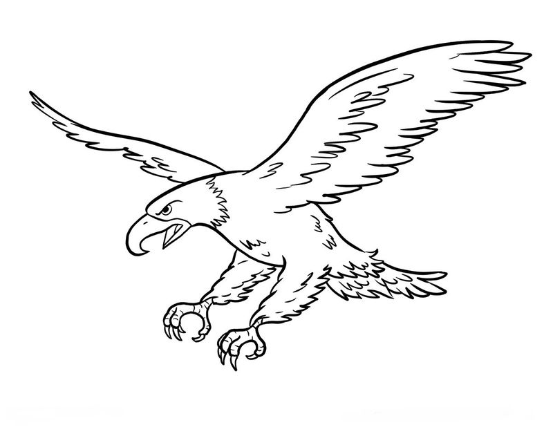 Sea Eagle Coloring Pages