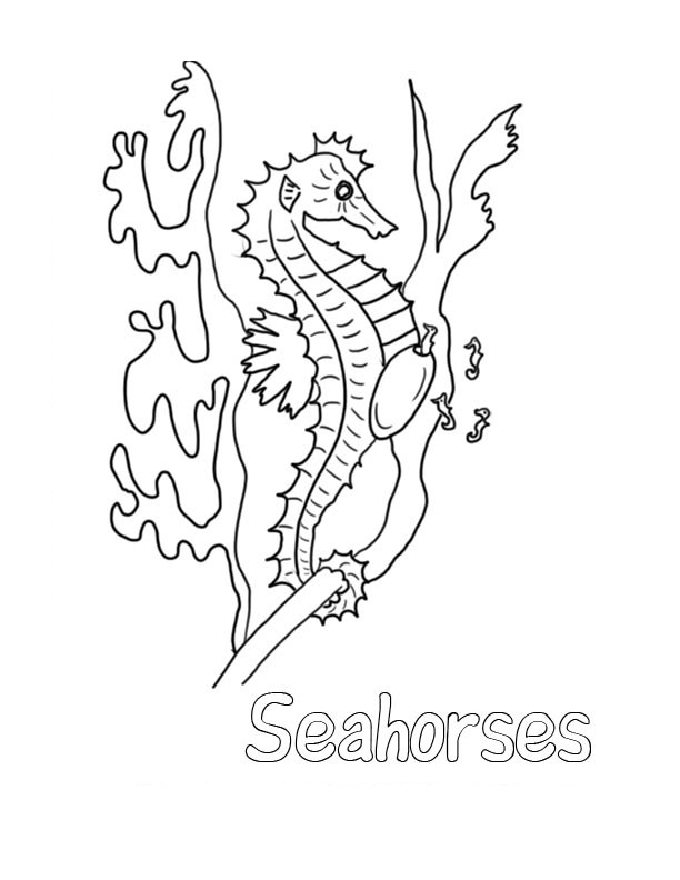 Seahorse Coloring Pages For Kids Pdf