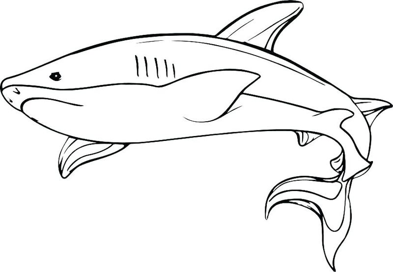 Shark Coloring Pages For Toddlers