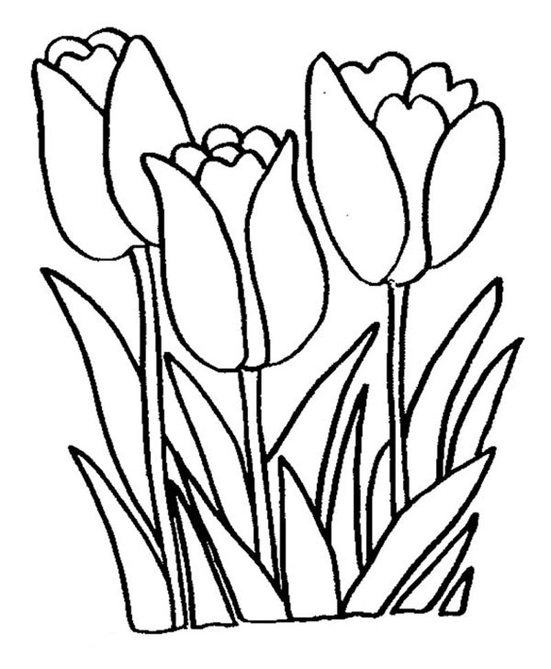 Spring Flowers Coloring Pages Free
