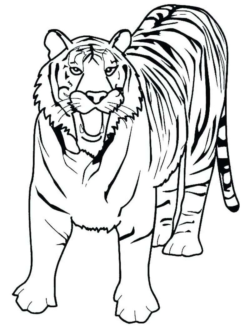 Tiger Coloring Pages Baby