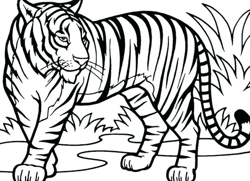 Tiger Coloring Pages Pdf