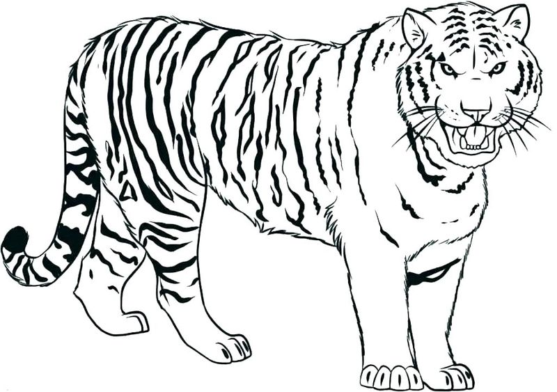 Tiger Coloring Pages Printable