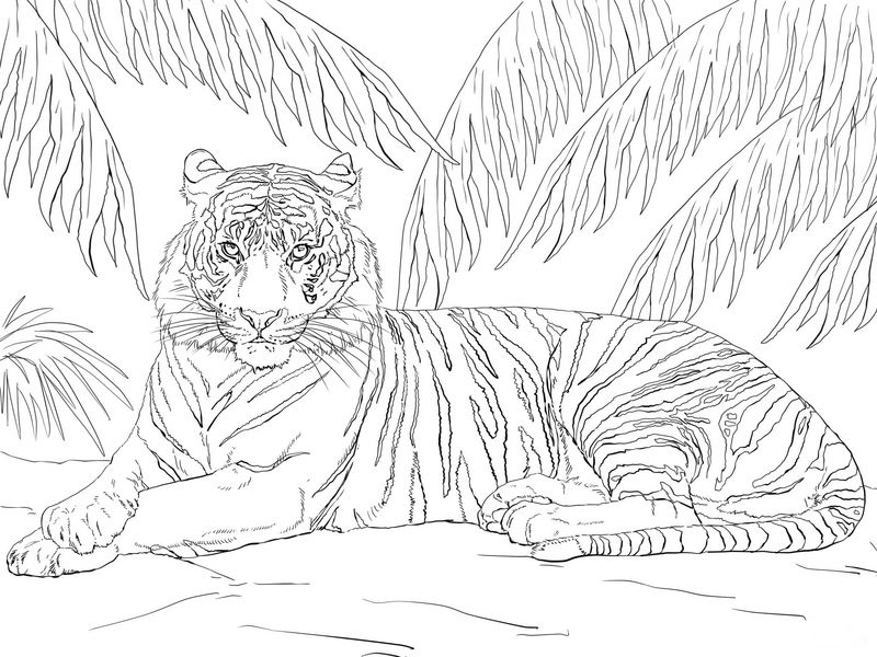 Tiger Coloring Pages Simple