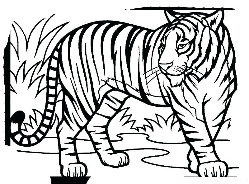 Tiger Colouring Pages For Adults
