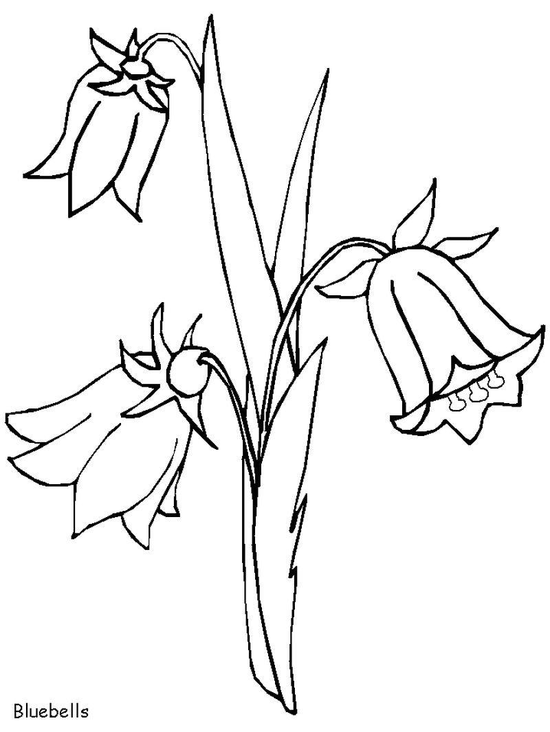 Trees And Flowers Coloring Pages