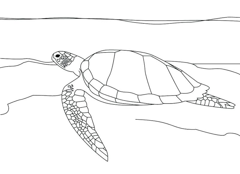 Turtle Coloring Pages For Adults Printable