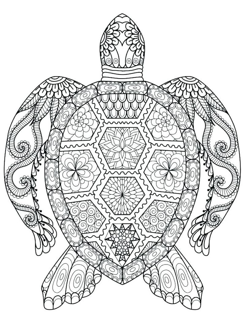 Turtle Coloring Pages For Preschoolers Free
