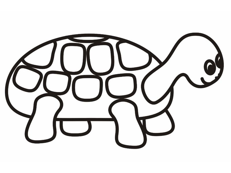 Turtle Coloring Pages For Toddlers