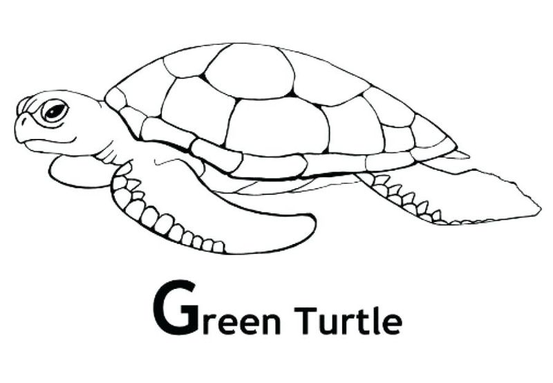 Turtle Coloring Pages Free Download