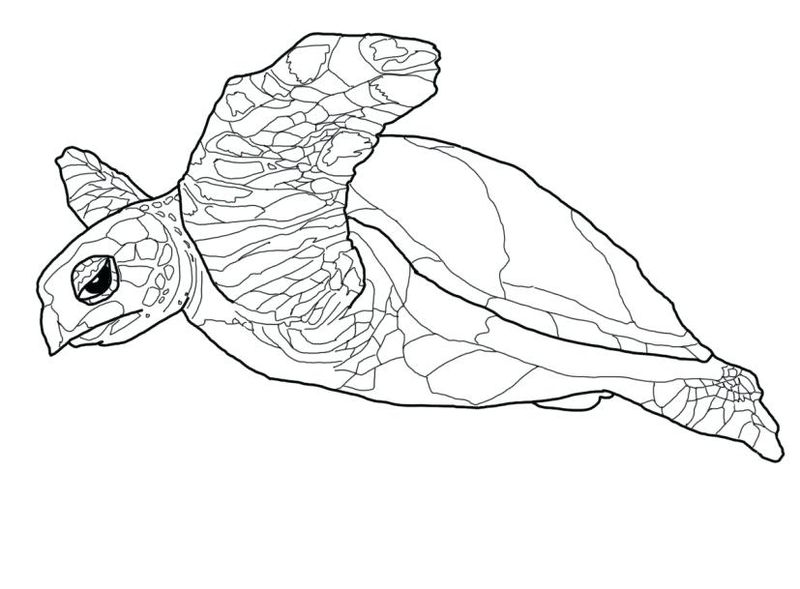 Turtle Coloring Pages Free