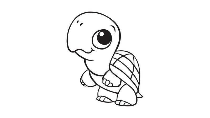 Turtle Coloring Pages Ideas