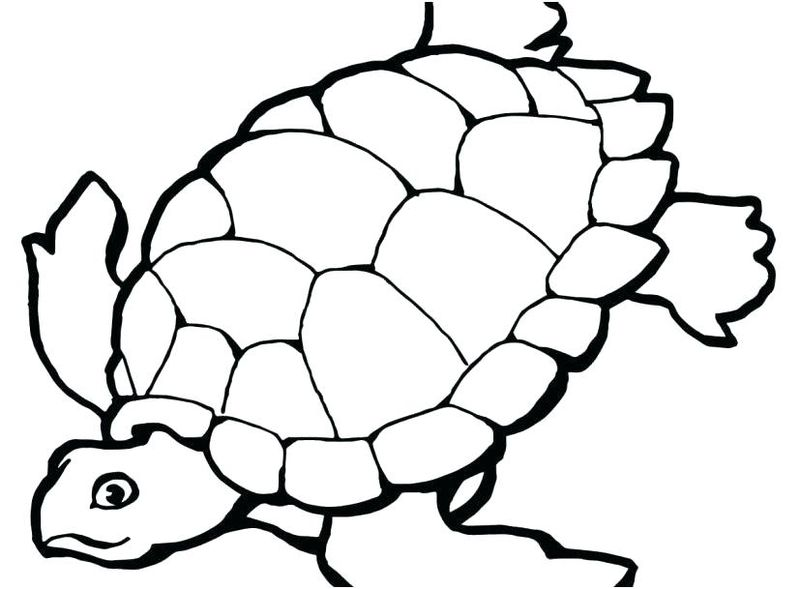 Turtle Coloring Pages Parking