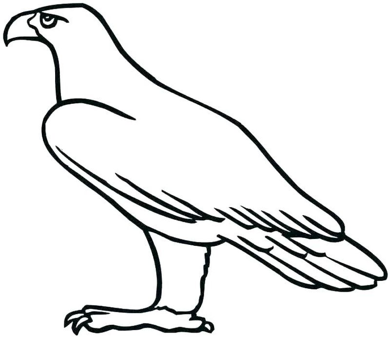 War Eagle Coloring Pages