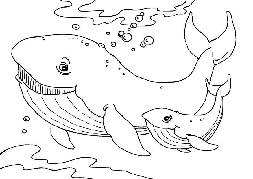 Whale Coloring Pages Free Printable