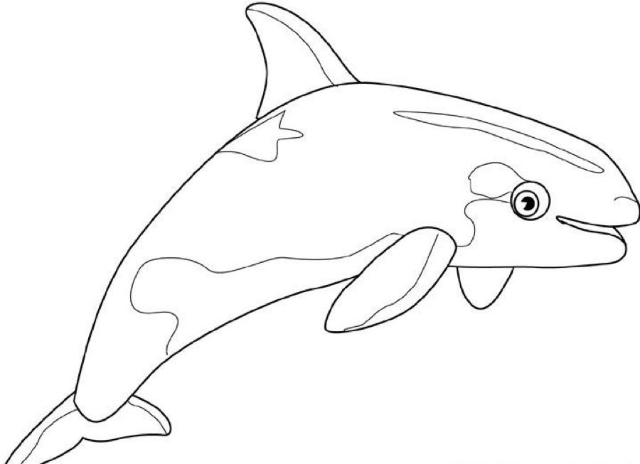 Whale Coloring Pages Pdf