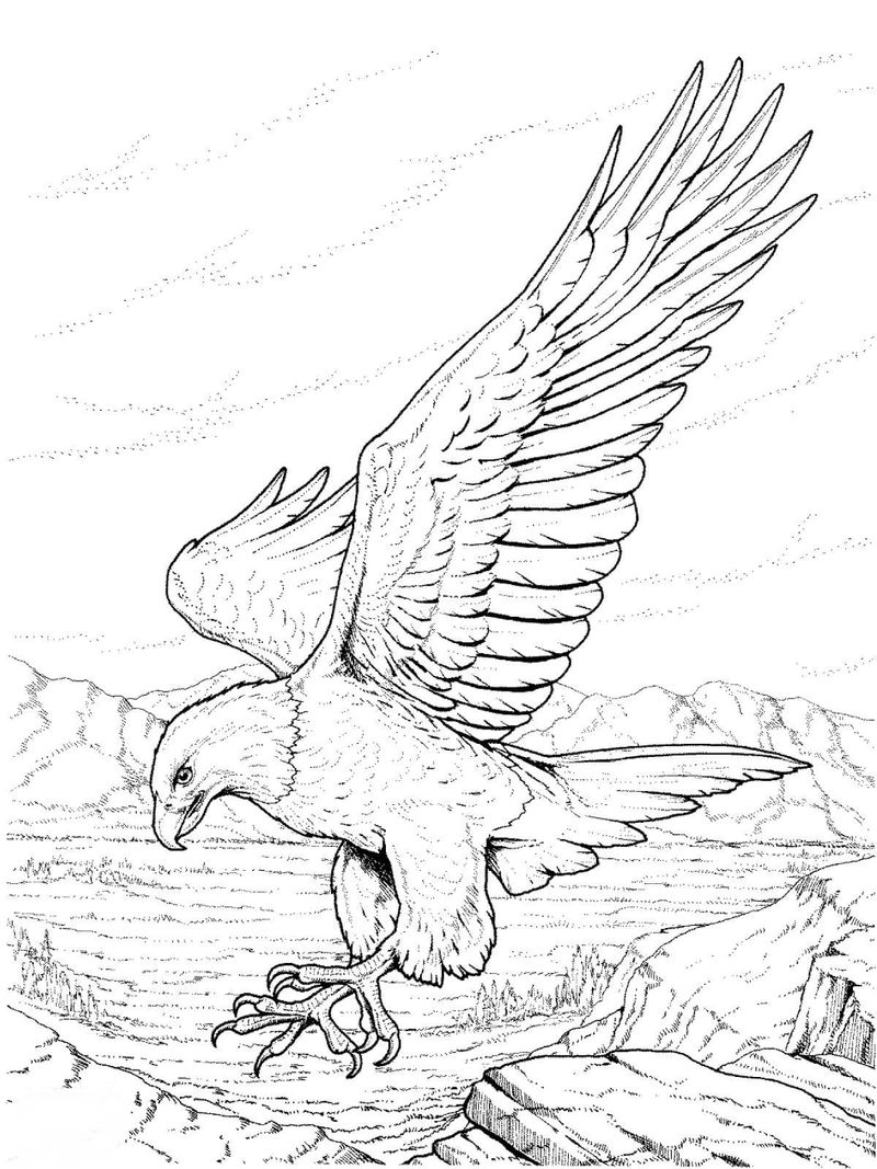 Wolf And Eagle Coloring Pages