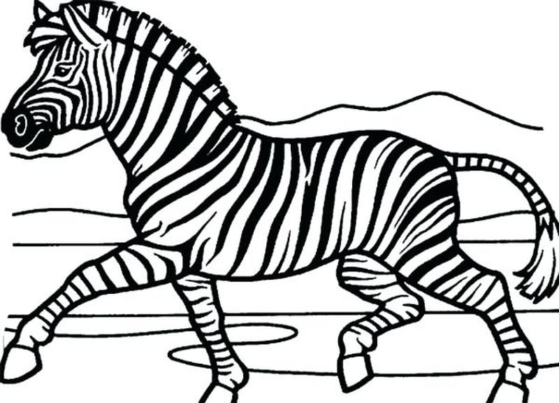 Zebra Animal Coloring Pages