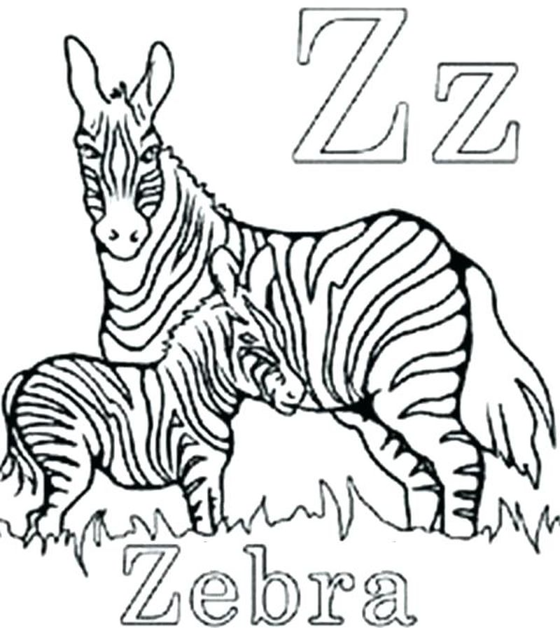 Zebra Coloring Pages Free