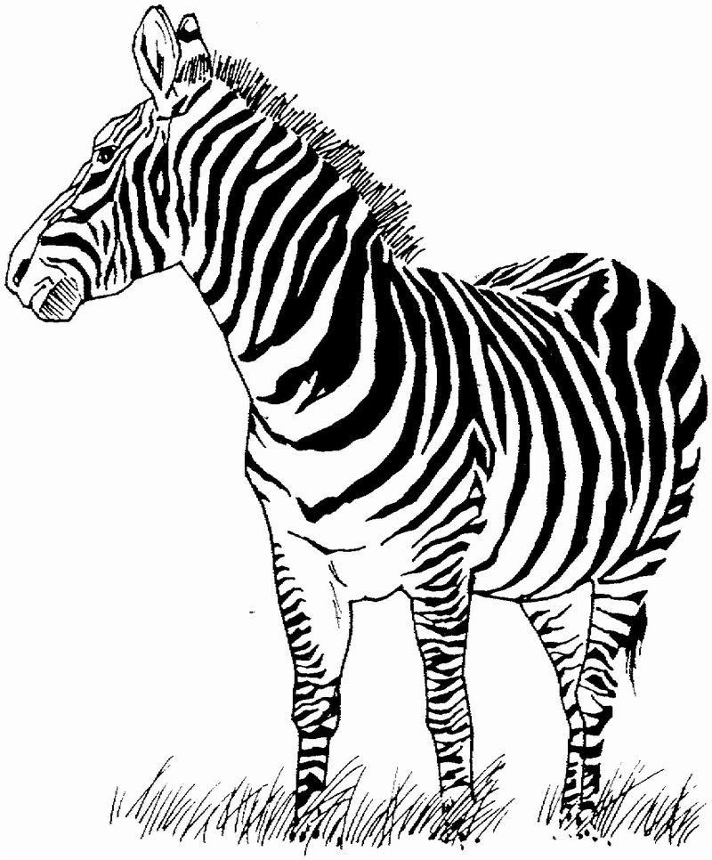 Zebra Coloring Pages To Print Out