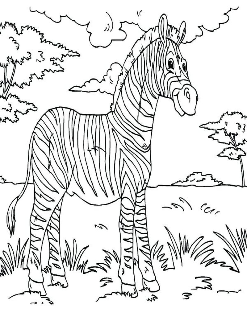 Zebra Colouring Pages To Print