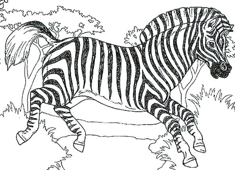 Zebra Man Lego Coloring Pages