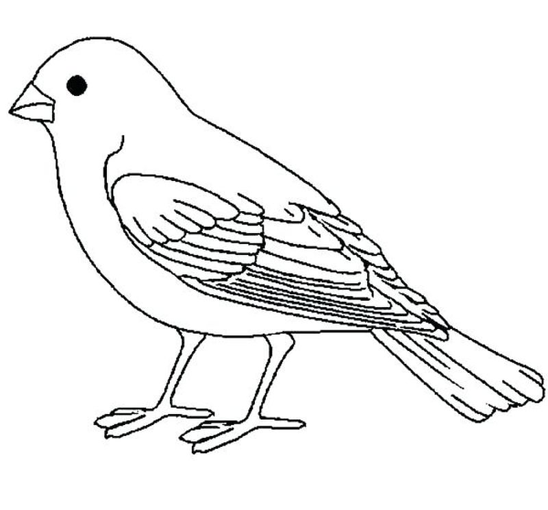 bird coloring pages free