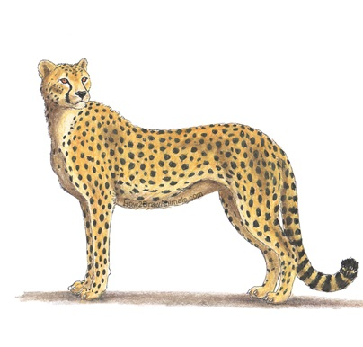 coloring pages cheetah pdf