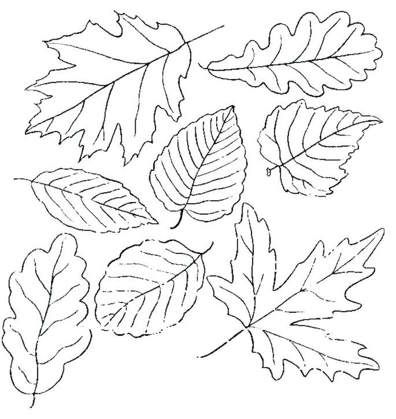 coloring pages leaf shapes