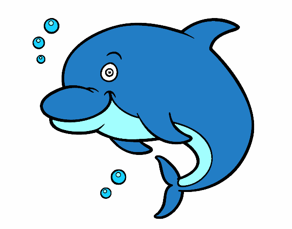 dolphin coloring