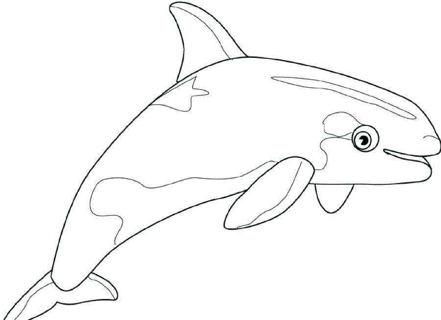 dolphin printables coloring pages