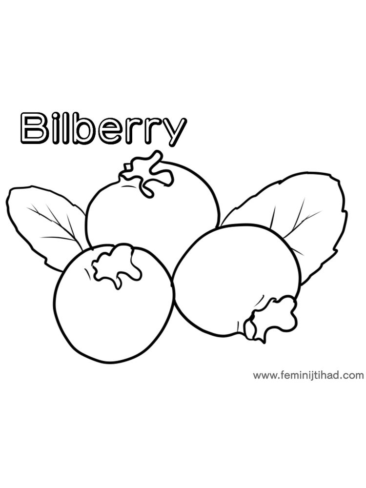 easy bilberry coloring page print