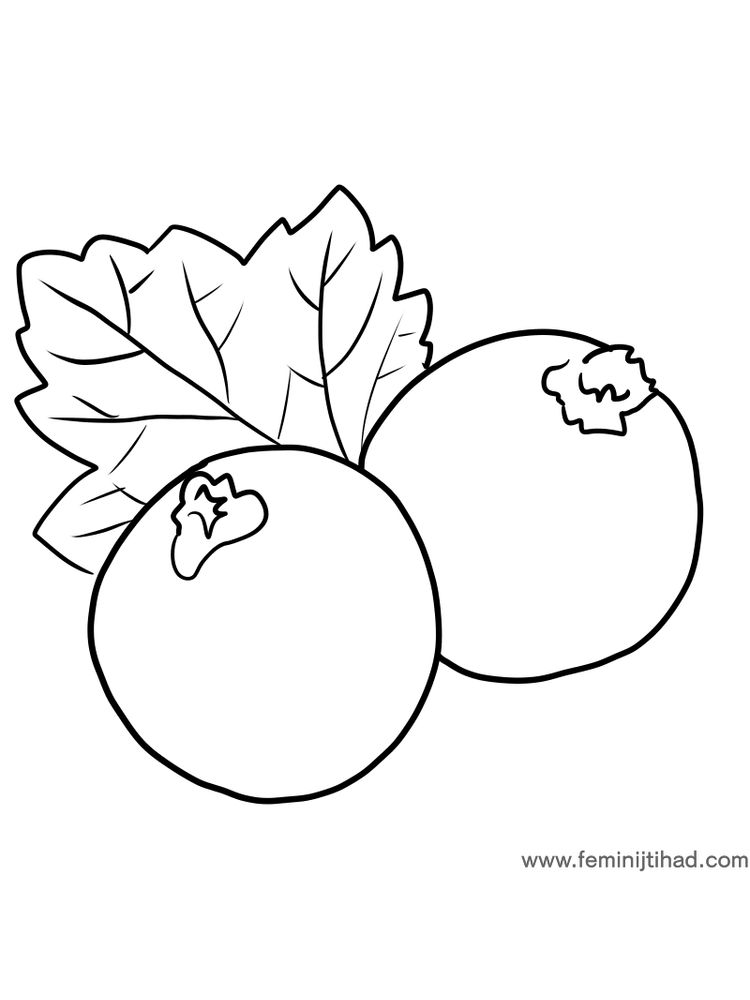 easy black currant coloring page for print pdf