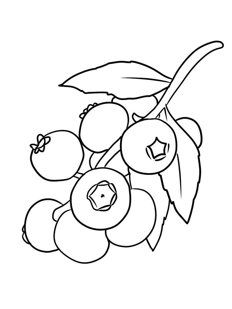 easy blueberry coloring page pdf