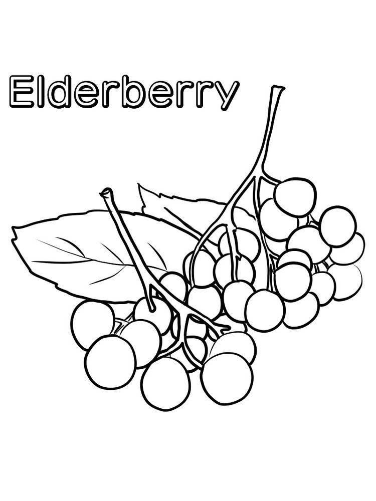 easy elderberry coloring images
