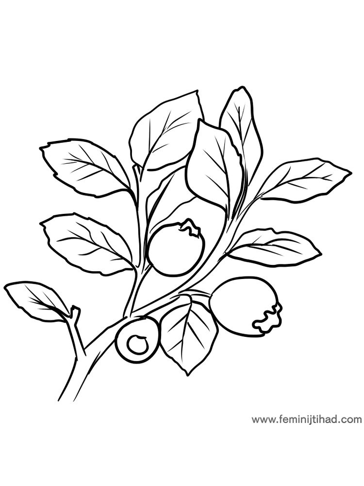 easy free bilberry coloring page print