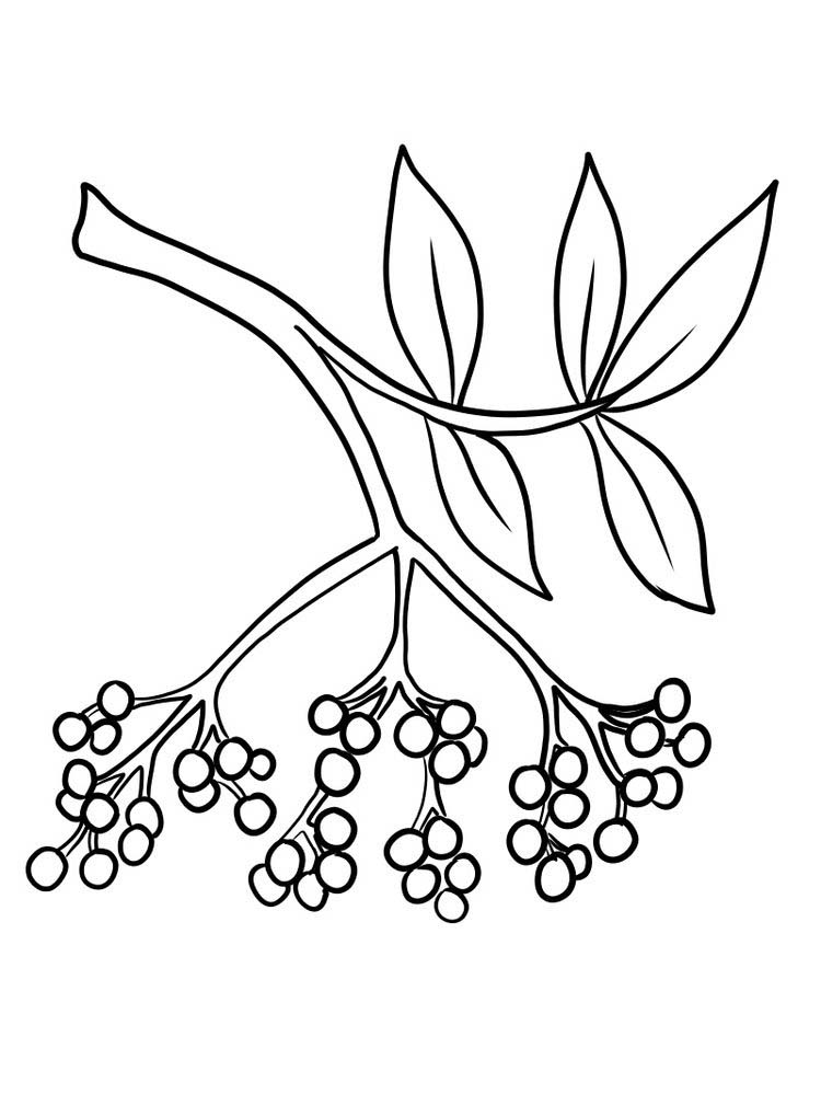 easy printable elderberry picture for coloring