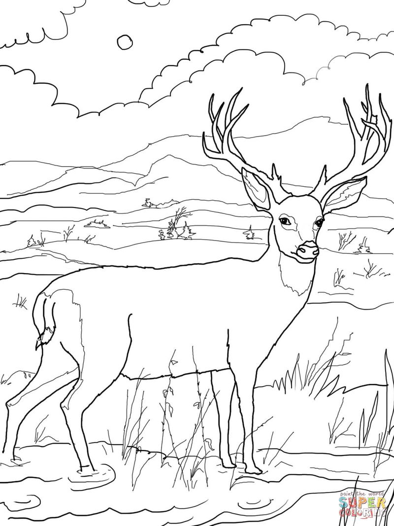 free Christmas Deer Coloring Pages