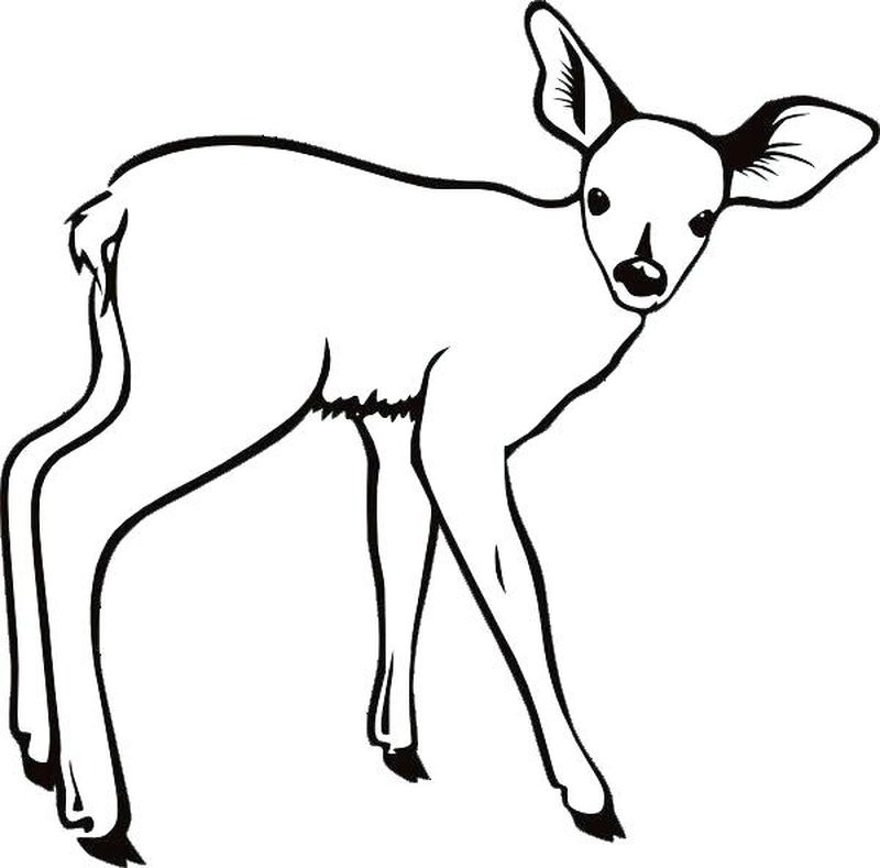 free Coloring Pages Animals Deer