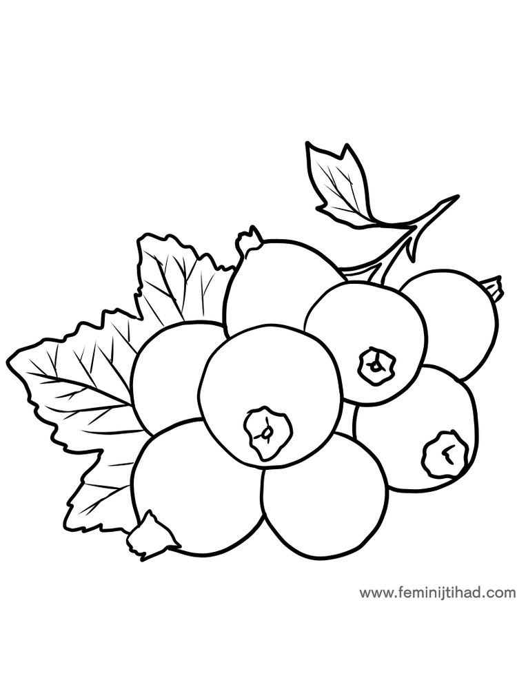 free black currant coloring page download