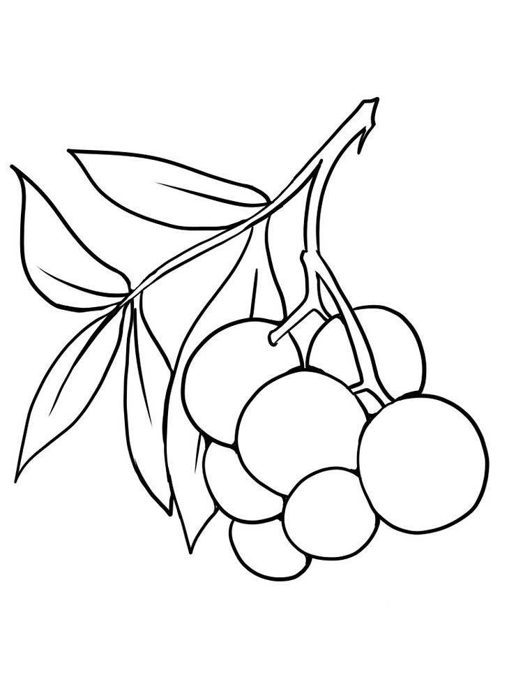 free elderberry coloring page free print