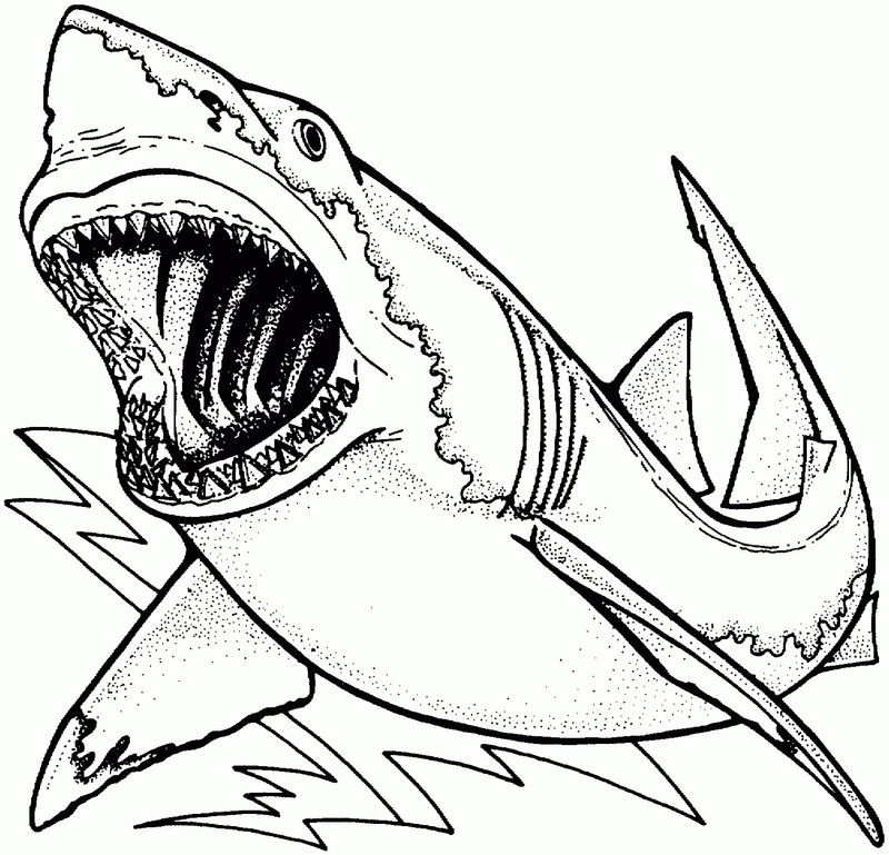 free shark coloring pages