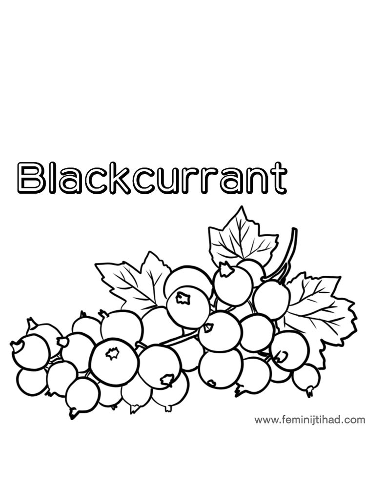 image Blackcurrant coloring page print