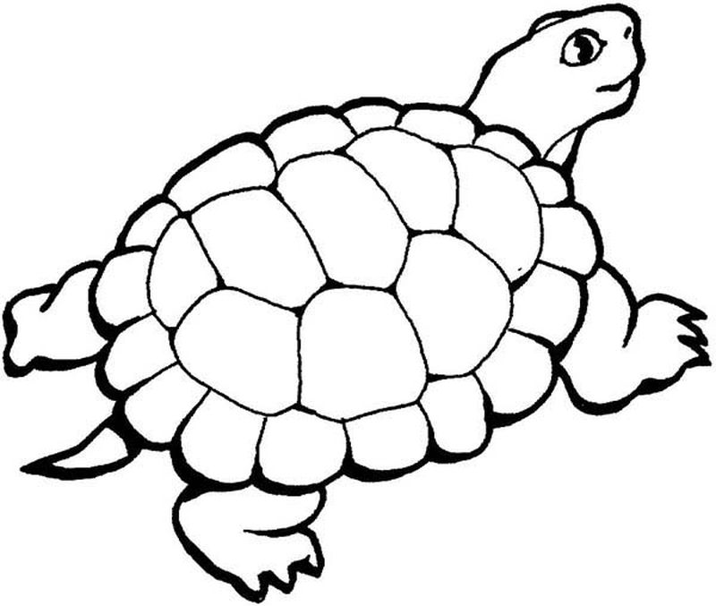 images turtle coloring pages