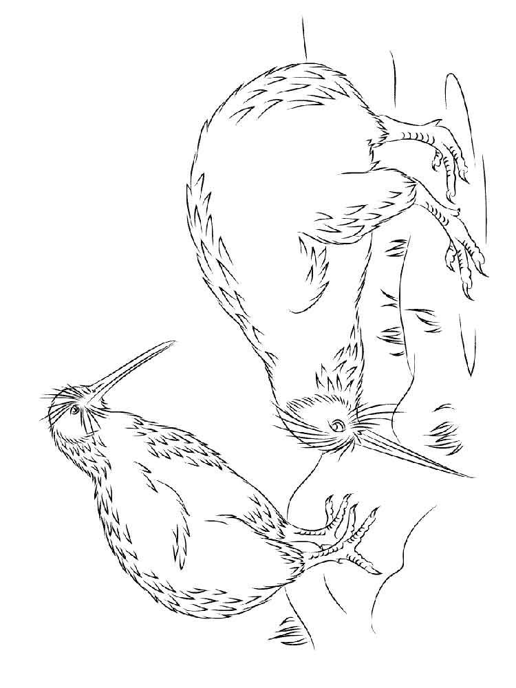 new Kiwi coloring pages free image