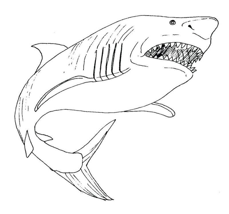 shark coloring pages for preschoolers