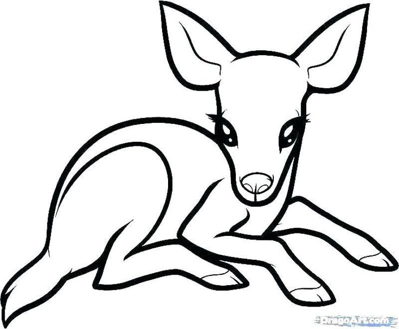 Animal Jam Coloring Pages Of A Spike Free