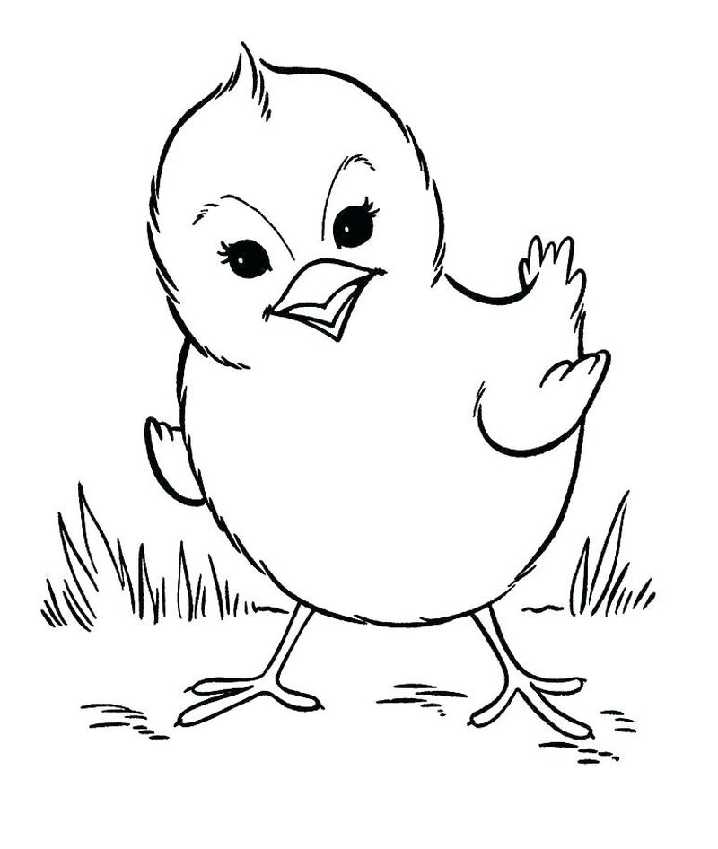 Baby Animal Coloring Pages Free pdf